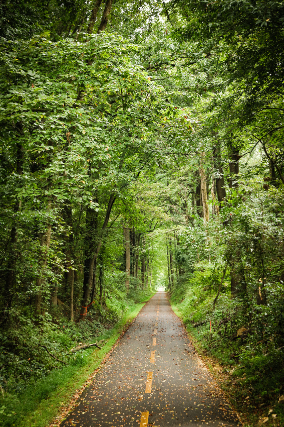 Narrow bike path heads deep into the thick forest; trees and their limbs form a canopy over the path. 2016 in photos.