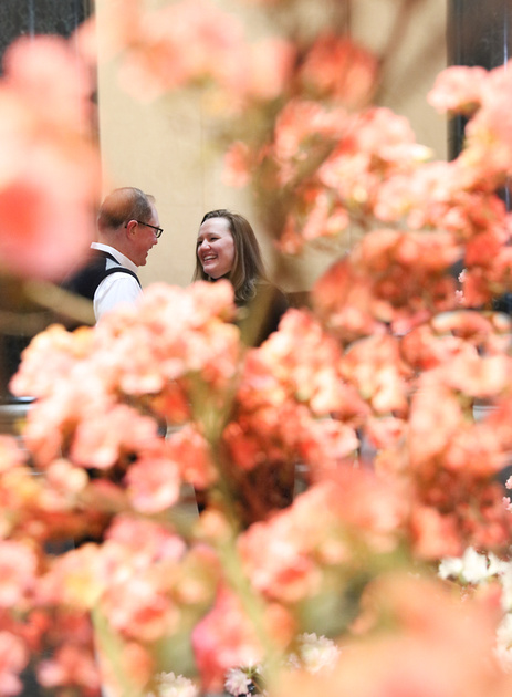 Engagement photography, pink cherry blossoms surround a smiling couple.