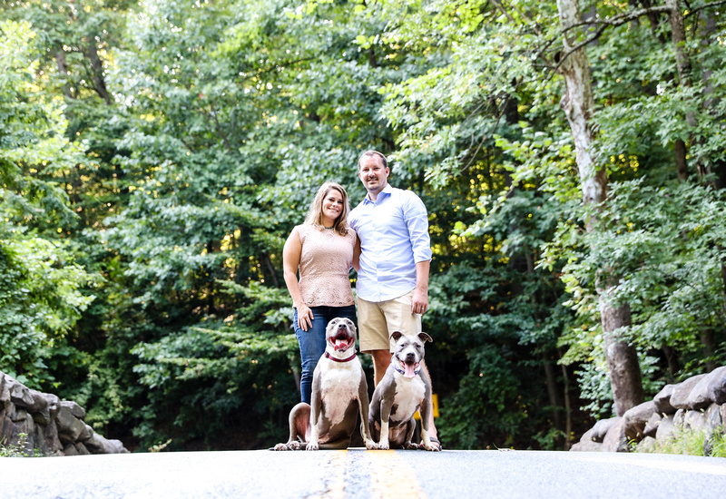 Family photography: two happy pit bulls sit on a stone bridge with the owners standing behind them.