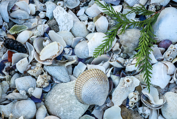 Wedding photography, a collection of seashells and seaweed.
