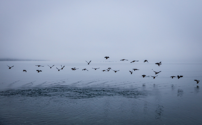 Wedding photography, birds fly off the water at dawn.