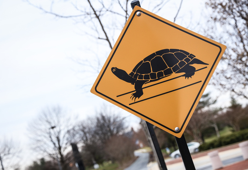 Engagement photography, a yellow road sign indicating turtle crossing.