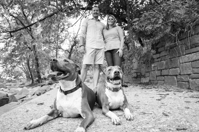 Family photography: a black and white photo of a two bulls laying on the ground, with the owners standing behind them, smiling.